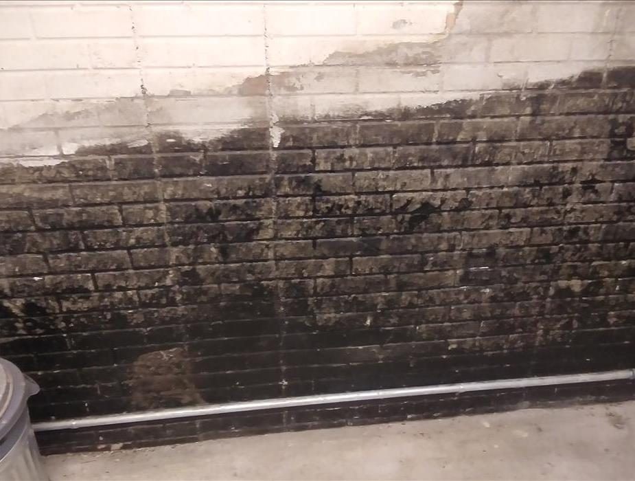 Black mold on a concrete wall