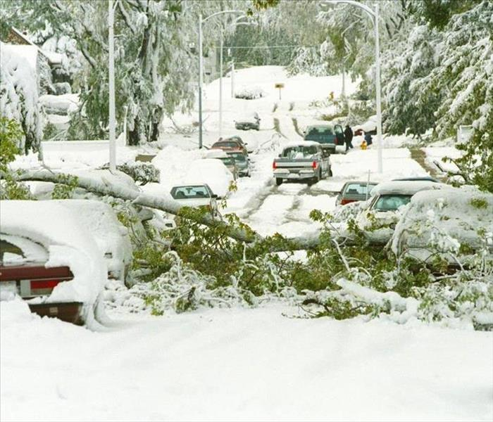 heavy snow caused trees to break into the street and damage cars